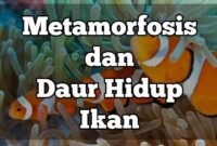 metamorfosis ikan