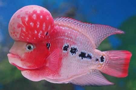 siklus hidup ikan